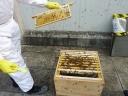 Rowley Way Bees